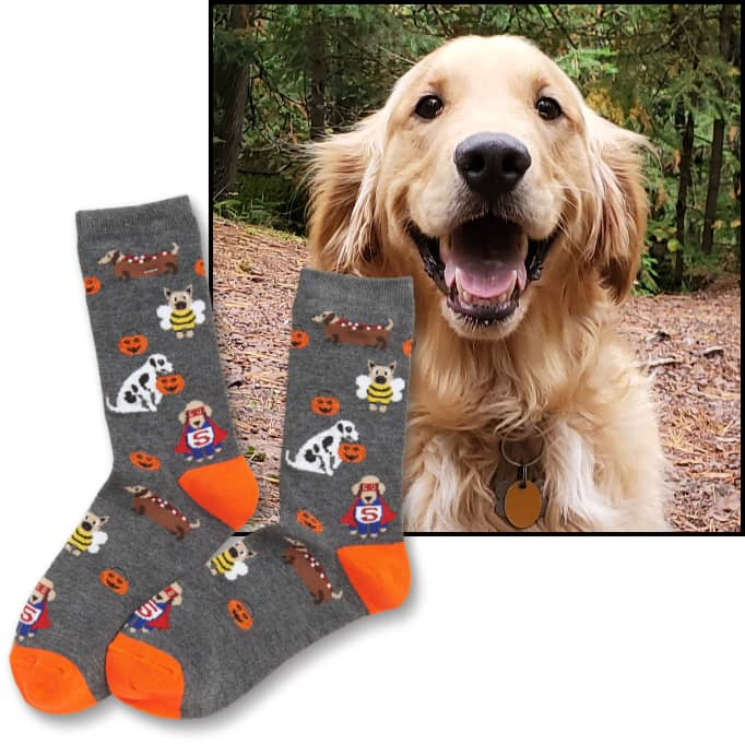 Image of a happy dog superimposed with a pair of cozy, autumn socks with dogs printed on them.